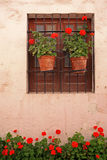 Window with colorful plants in pots. Stock Photography