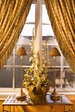 Window with curtain and plant in home. Stock Image