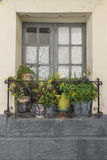 Window with curtains. And decorated with pots Royalty Free Stock Photo