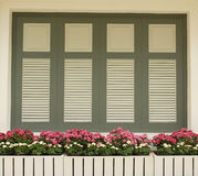 Window and daisy flower Royalty Free Stock Images