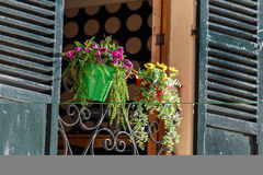 Window decorated with flower pots Royalty Free Stock Images