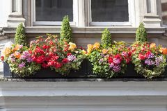 Window decorated with flowers, decorative greenery, typical view of the London street, London, United Kingdom Royalty Free Stock Image