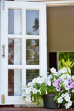 Window decorated with fresh flowers.  stock photos