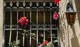 Window with lattice on Malta. Window decorated with fresh flowers with ornamental metal lattice on Malta Stock Photos