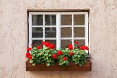 Window decorated with Geranium flowers Stock Photos