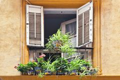 Window decorated with pots flowers stock image