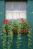 Window Decoration. With geraniums Stock Photo