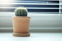 Window decoration with Cactus Royalty Free Stock Photos