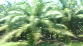 Window fast train palm grove 4K. Palm grove through the window of a fast-moving train. Palm oil occupies the first place in the world among the production of stock video footage