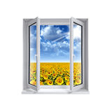 Window in the field of sunflowers Stock Photo
