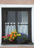 Window and Flower Royalty Free Stock Images