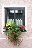 Window and Flower Royalty Free Stock Image