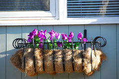 Window flower basket Stock Images