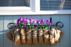 Window flower basket Stock Images