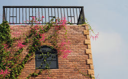 Window and flower Stock Photography