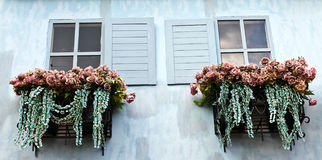 Window and flower box. Close up of window and flower box Royalty Free Stock Photography