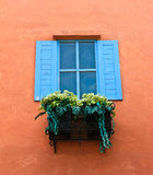 Window and flower box. Close up of window and flower box Stock Photography