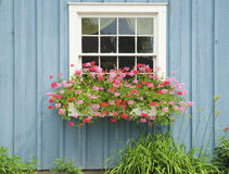 Window flower box. With beautiful flower in bloom Royalty Free Stock Image