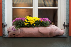 Window Flower Box. Box with flowers in the form of a pig Stock Photography