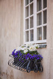 Window flower box Royalty Free Stock Photos