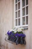 Window flower box Royalty Free Stock Photos