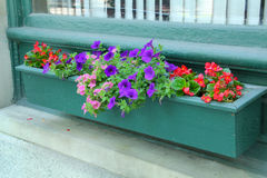 Window flower box, purple and red flowers, Keene, New Hampshire. Royalty Free Stock Images