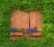 Window with flower boxes and green wild wine Stock Photos