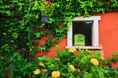 Window and the flower cover Royalty Free Stock Photo