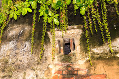 Window with flower. At the Hanoi, Vietnam Royalty Free Stock Photos