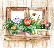 Window with flower pots Royalty Free Stock Photo