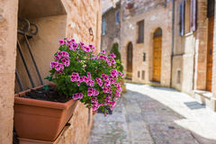 Window with flower vase in the alley Stock Image