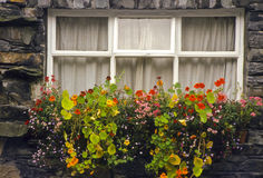 Window with flowerbox, England Stock Image