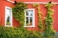 Window and flowerbox with red wall Stock Image