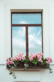 Window and flowerbox Royalty Free Stock Images