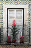 Window with flowering plants on sill in Lisbon Stock Photos