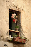 Window with flowerpot Royalty Free Stock Images