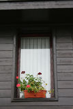 Window with flowerpots Royalty Free Stock Images