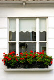 Window flowers Stock Photo