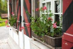 Window with flowers Stock Photos
