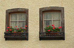 Window and flowers Stock Photos