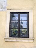 Window with flowers. Old wooden window and green foliage on the street Stock Images