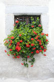 Window with flowers Royalty Free Stock Photography