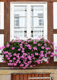 Window with flowers Royalty Free Stock Image