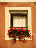 Window with flowers. Window with red flowers on Mediterranean Stock Photography
