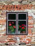 Window with flowers. Dark window with red flowers on an old brick wall Royalty Free Stock Photography