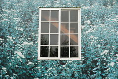 Window and flowers. Floral wallpaper and glass window Stock Photo