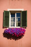 Window and flowers. Shuttered window with colorful flowerbox royalty free stock images