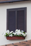 Window and flowers. Beautiful window with flower box and shutters Stock Photos