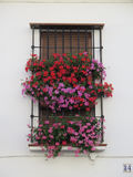 Window with flowers. Flowers behind Wrought Iron Grill or bars on Window in andalusian village Royalty Free Stock Image