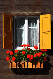 Window and flowers royalty free stock photo